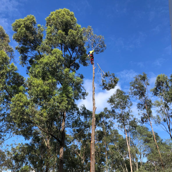 Council Regulations on Tree Removals on Public and Private